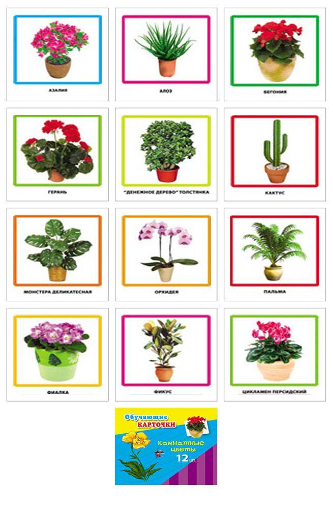 Картинки комнатные цветы с названиями для детей, лет